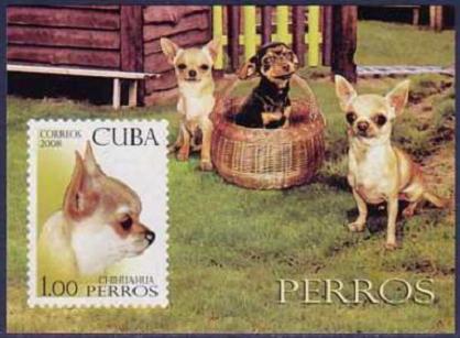 2008年キューバ共和国 チワワの切手シート