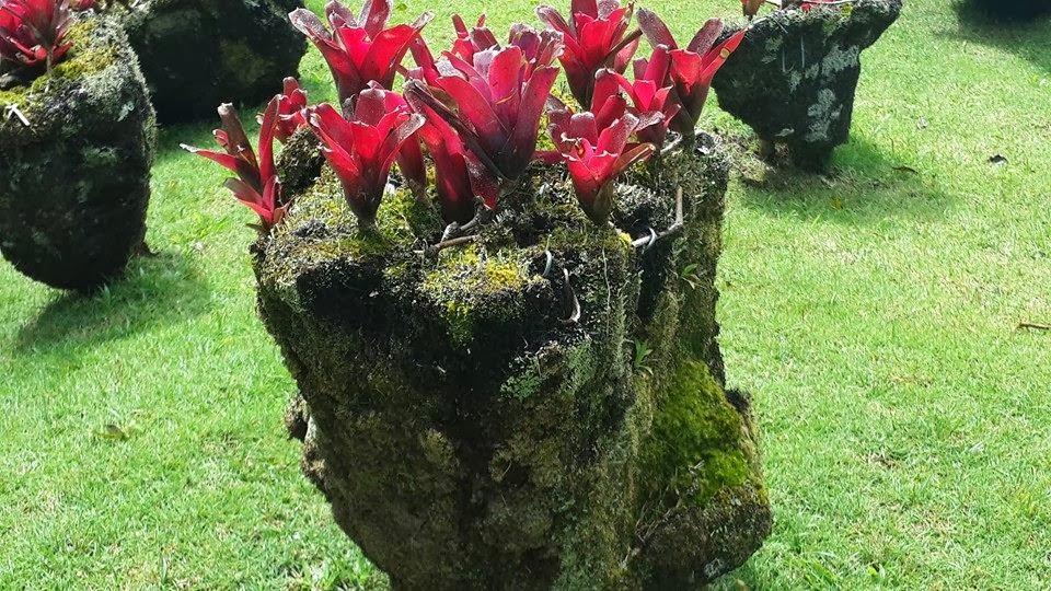"<img src="" garden paradise.jpg"" lt="" http://dailytravelexperience.blogspot.com//"" />"