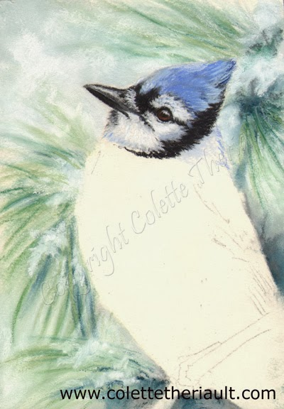 Blue Jay Painting in pastel update by Canadian Avian Artist Colette Theriault