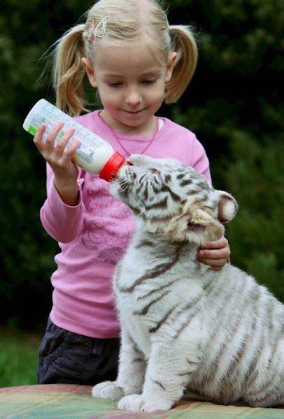 Bebe De Tigre Blanco