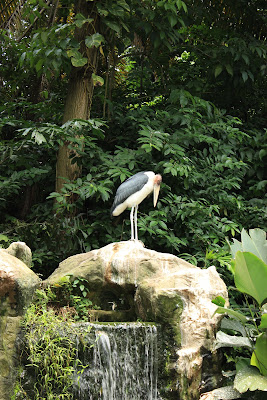 Expect to come across too larn almost a huge diversity of birds too a adventure to become upward unopen too pe Singapore attractions : Jurong Bird Park