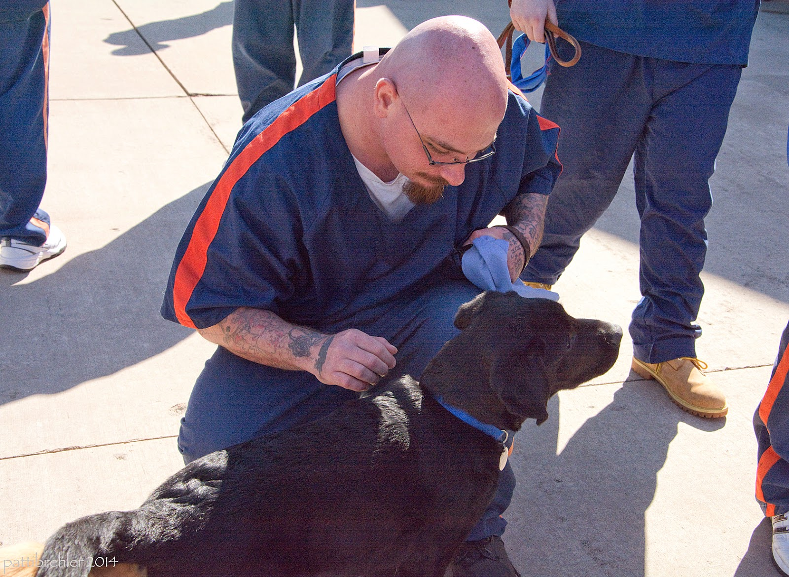 A man dressed in the prison blue uniform with an orange stripe down his should and short sleeve, is kneeling on sunny cement looking down at a black lab puppy. The man is bald and is wearing glasses and his arms are tatooed. He is looking down at the puppy and holding a baby blue Future Leader Dog jacket in his left hand. He is reaching toward the lab with his right hand. The lab is facing to the right. There are legs of other men visible in the background on both sides of the kneeling man and directly behind him. There are stark shadows of the men's legs across the cement. The lab is wearing a blue collar.
