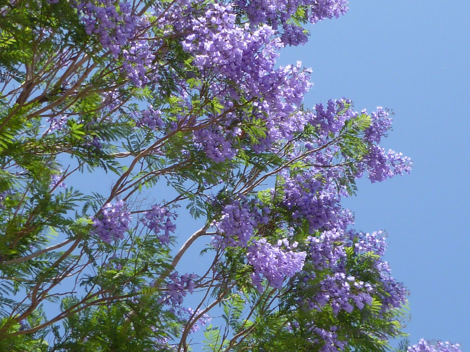 The splendidly imperfect miss m like buttah we are the house with the purple flowers in my defense the flowers are only growing on the top half of this very tall tree so i couldnt see them without izmirmasajfo