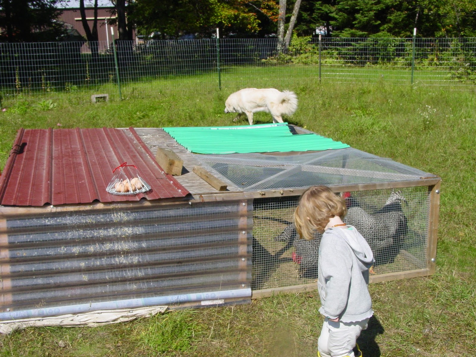 Cathy and dave 39 s blog for Big chicken tractor