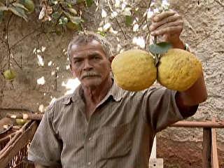 Moradora do Itapoã, no DF, colhe 'limão gigante' com 2,3 quilos