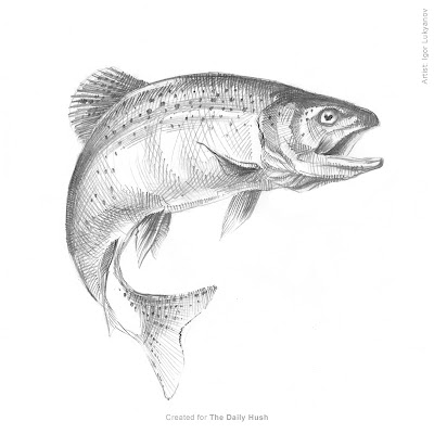 trout art, fish sketch drawing