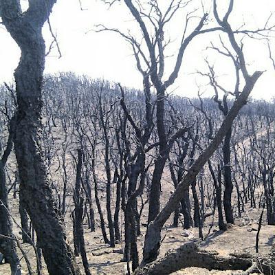Gran part de la carretera de La Jonquera a Cantallops té aquest trist paisatge