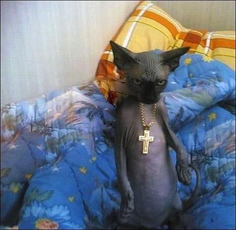 Cat Basilisk Music Box Shocked
