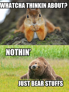 whatcha thinkin about, nothing much, just bear stuff