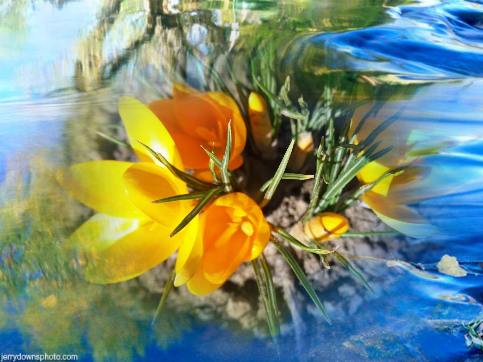 Рисунок девушки с лепестками цветов