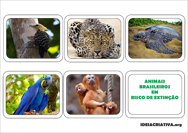 Atividade Fauna Brasileira Animais em Risco de Extinção Projeto Meio Ambiente
