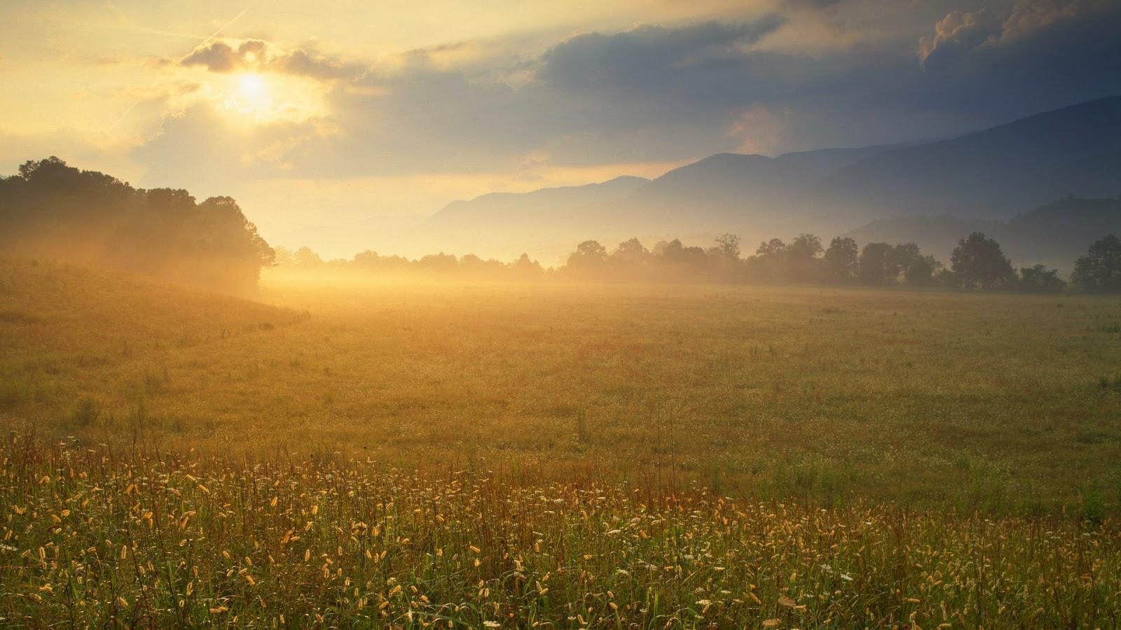 Natuur wallpaper met veld in de ochtend