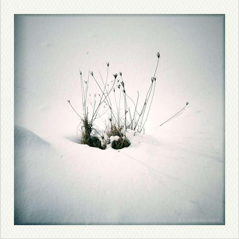 A shrub in the snow