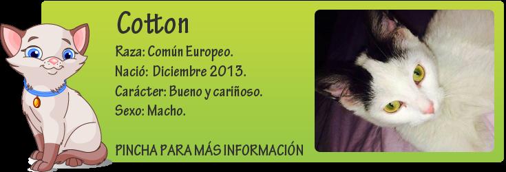 http://mirada-animal-toledo.blogspot.com.es/2014/04/cotton-gatito-en-adopcion.html