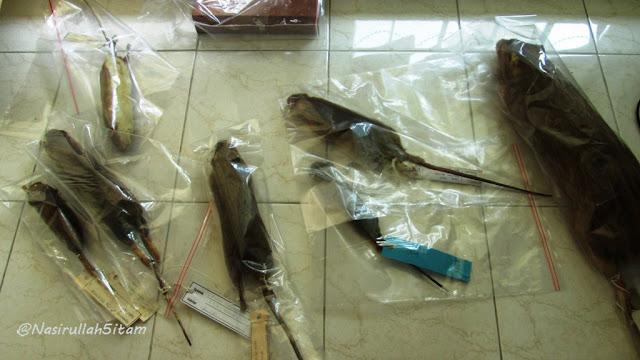 Tikus-tikus yang diawetkan