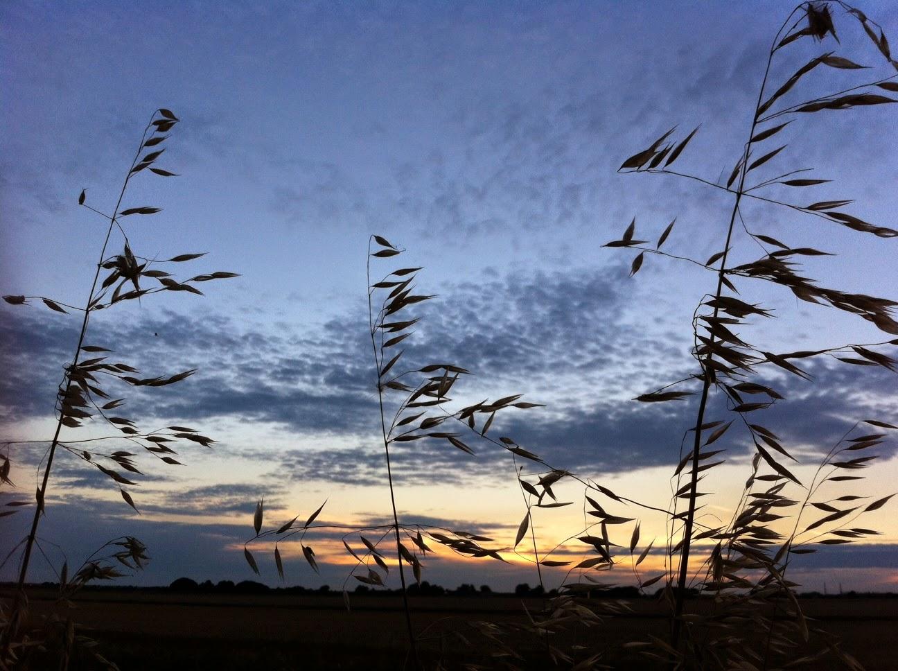 fen skyscape