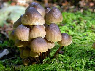Imagenes de hongos
