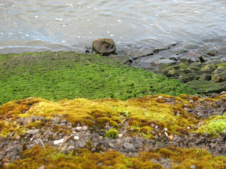 Mossy Riverbank, Columbia River