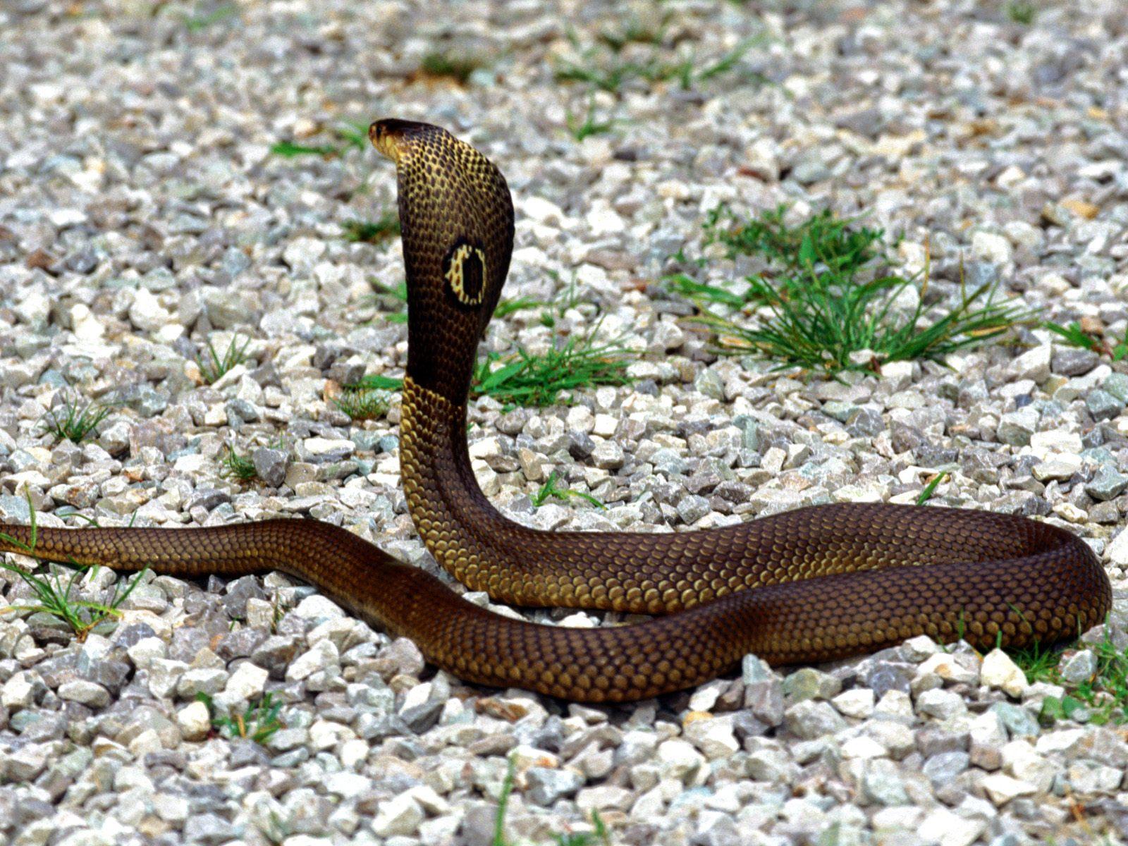 http://4.bp.blogspot.com/-hq_Wf1GxTeQ/Tti6Pdv-n8I/AAAAAAAABFI/HhJ5h0c7cmU/s1600/Snake-Charmer%2527s-Slithering-Protest.jpg