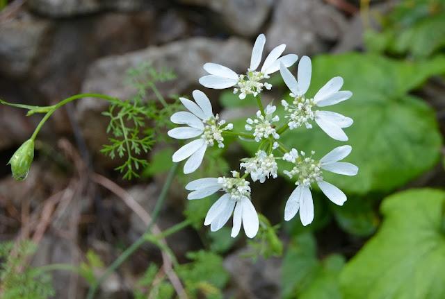 Kotor flowers