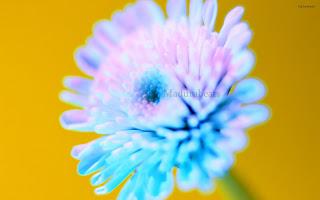 Flower images, Wide screen wallpapers,fresh flowers,Beautiful flowers,Blue_flower_shoot_hd_wallpaper