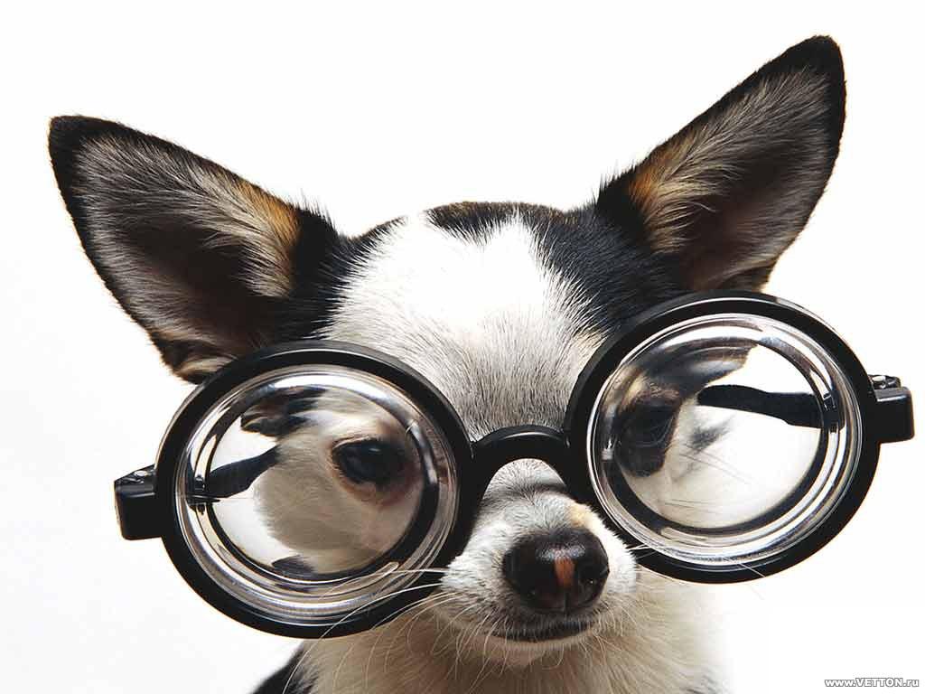 Image result for dog wearing glasses