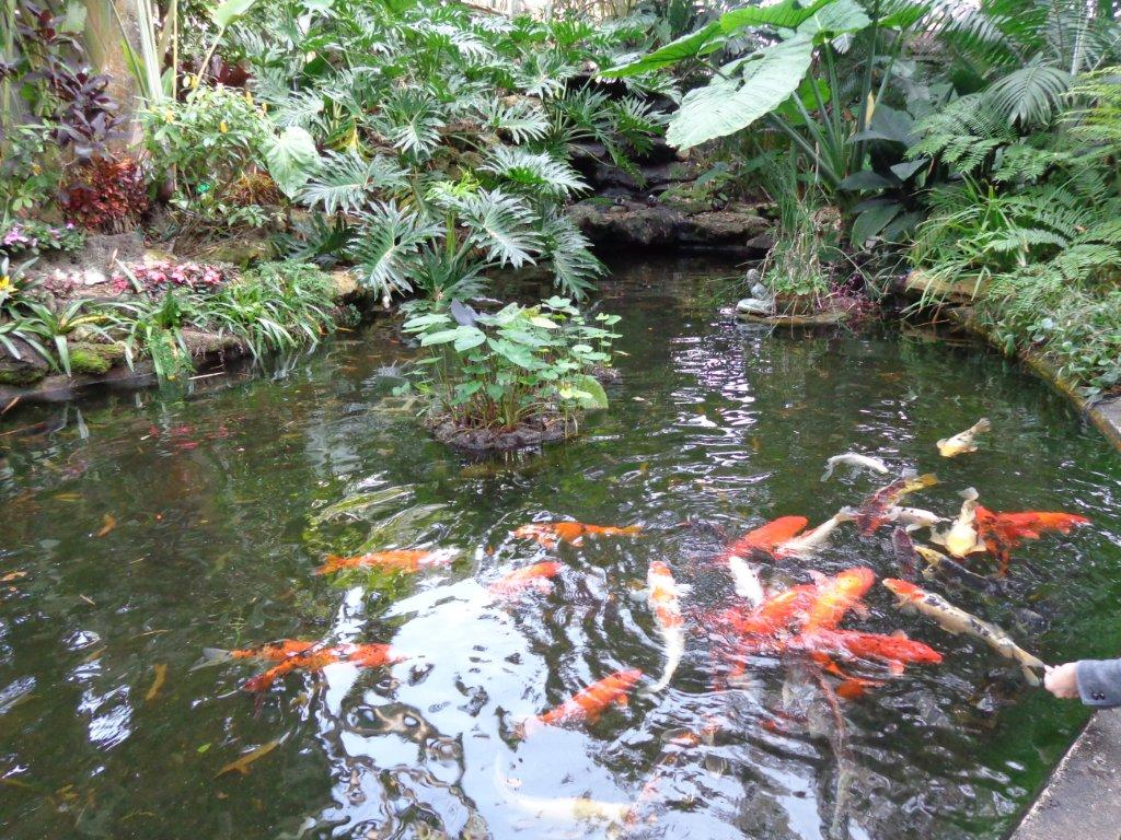 Travels without charley enjoying steinbeck 39 s america 12 for Garden pond without fish