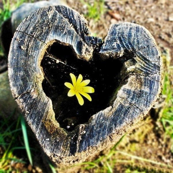 http://www.funmag.org/pictures-mag/nature/awesome-hearts-in-nature/