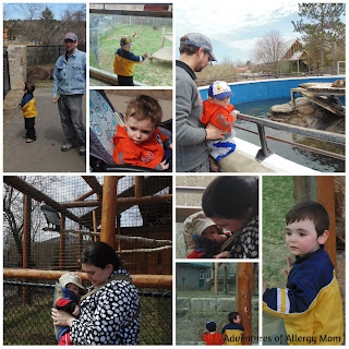 9 best tips for visiting the zoo with toddlers