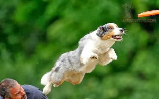 flying dog funny animals facts latest