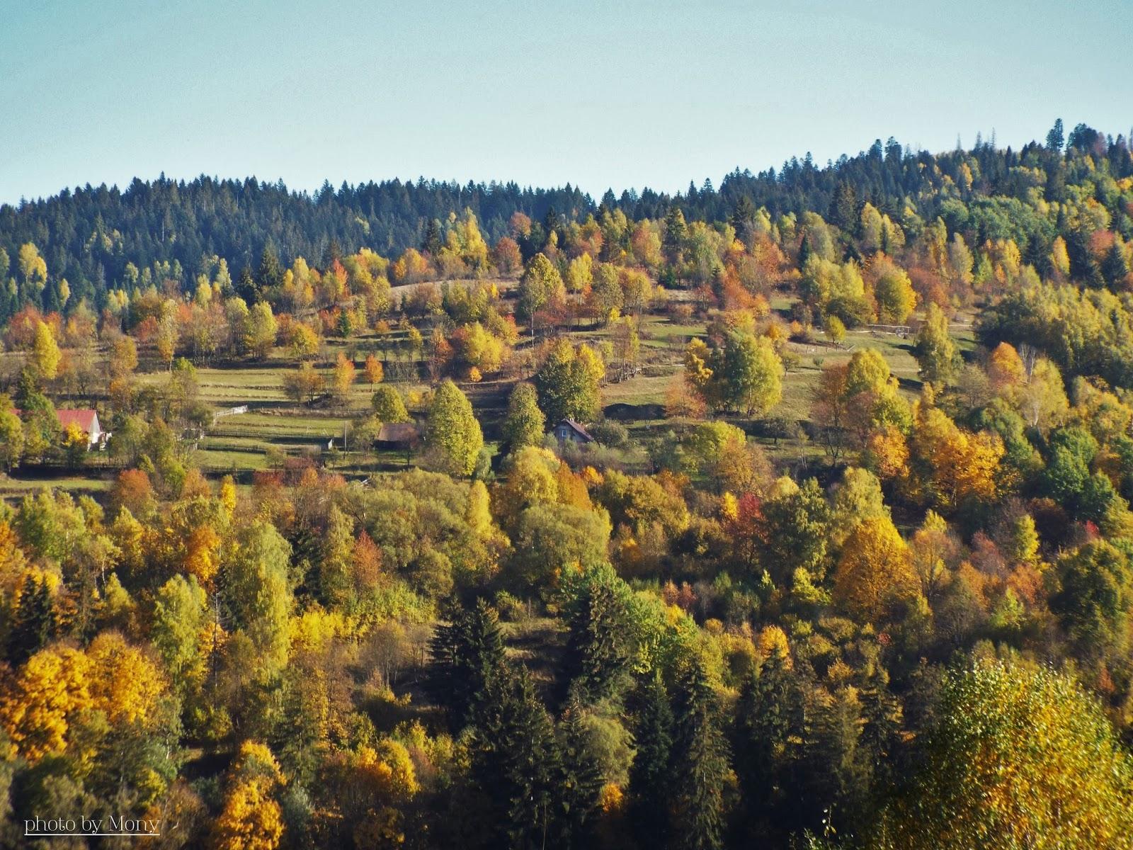93c05a04f (...a tu sa už jeseň krásne vyfarbila...javory, ach, tie vedia upútať  pozornosť...)