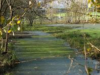 La bassa amb llenties d'aigua de la dreta de l'Estany de Can Torrent