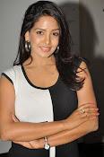 Pavani Reddy Glamorosu Photo shoot-thumbnail-3