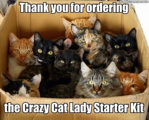 the-crazy-cat-Lady-starter-kit.jpeg