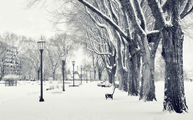 скамейки и лавочки зимой