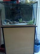 Peceras con motor, filtros, liquidos de pecera,  goldfish (4) en oferta. , consultar precios via ma