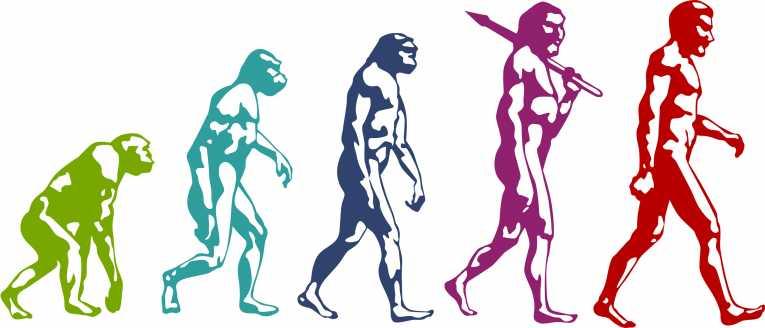 ¿Los humanos realmente descienden de los monos?