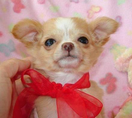 BloggyGenge!: Cani piccolissimi