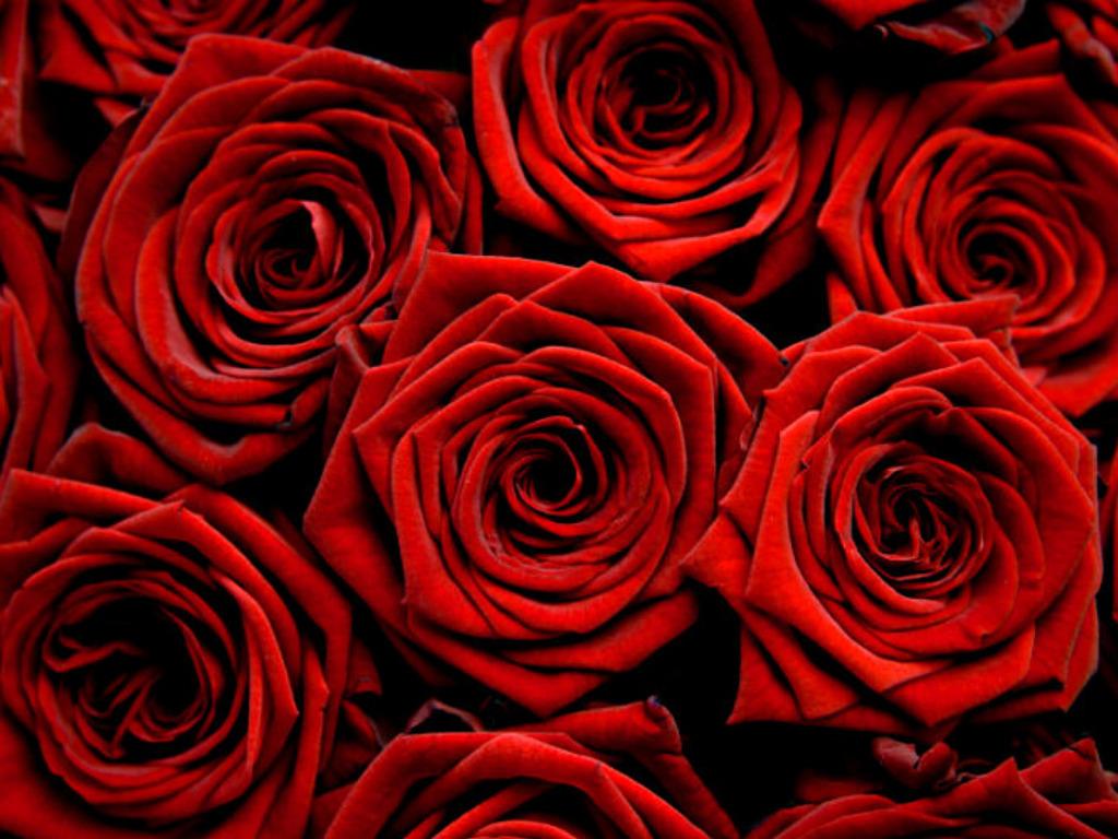 http://4.bp.blogspot.com/-ht0KWX2W7dM/UK43dShN2ZI/AAAAAAAAAeM/Gf6X3JQ3Zyg/s1600/Rose-Wallpaper-flowerdrop-24322607-1024-768.jpg