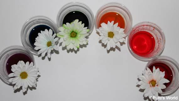 Preschool Science - How plants absorb water