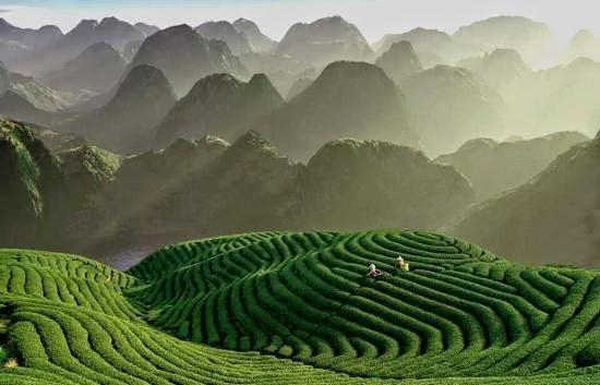 Tea garden hill of Munnar - Unsolved Mysteries India