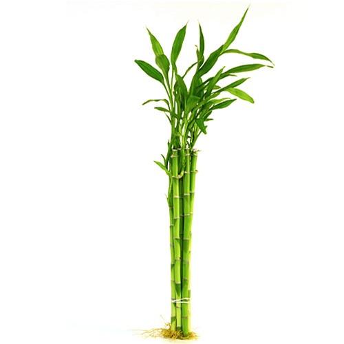 Bamboo Stcik People ~ Bamboo sticks valance photo