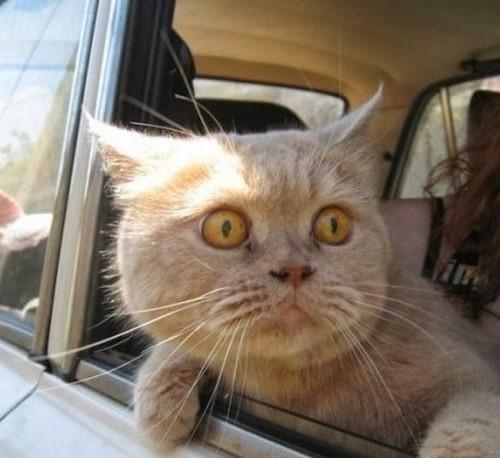 Scared cat.