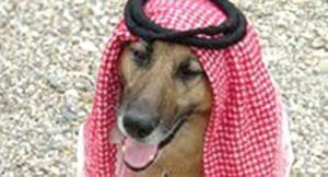 بروفيسور امريكي يسخر من الهوية السعودية..بتقديم كلب يضع شماغ فوق راسه!