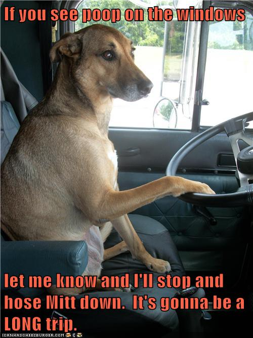 [Image: dog+driving+Mitt+hose+him+down.jpg]