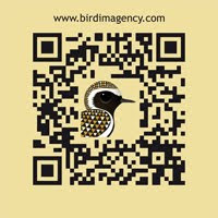 Bird Imagency