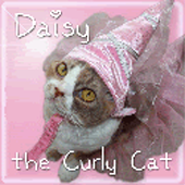 Daisy<br> the Curly Cat