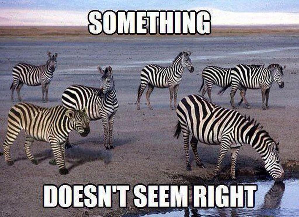 Funny Zebra Meme : Chuck s fun page meme ing it up