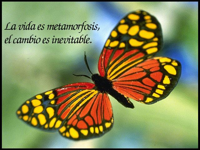 LAS CUATRO LEYES DE LA ESPIRITUALIDAD Metamorfosis+(1)