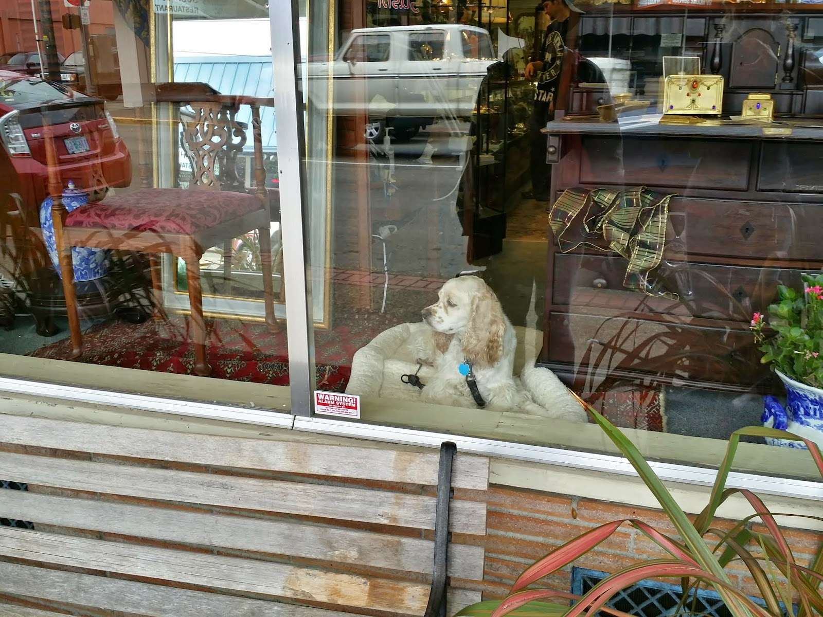 window display in Coos Bay